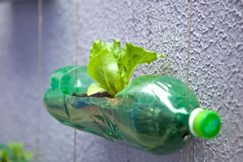 Rosenbaum_Plastic-Bottle-Garden_Detail